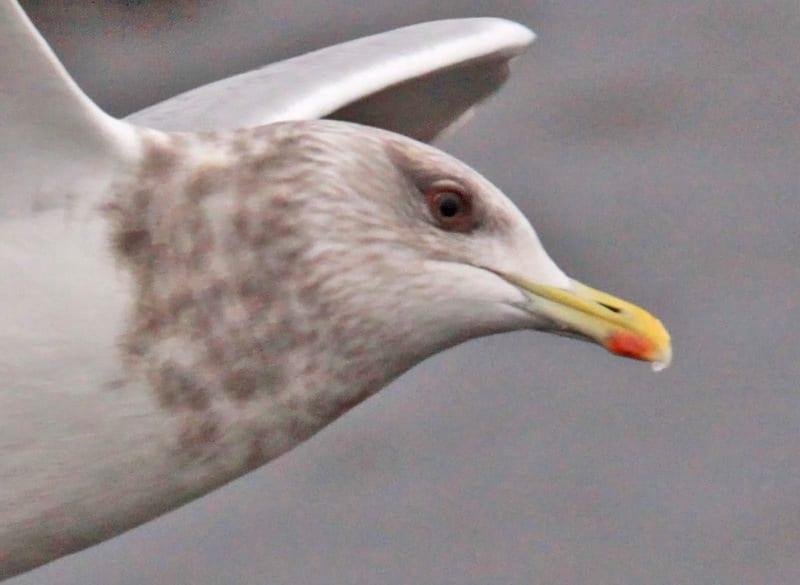 Bird Watching Killybegs Ireland
