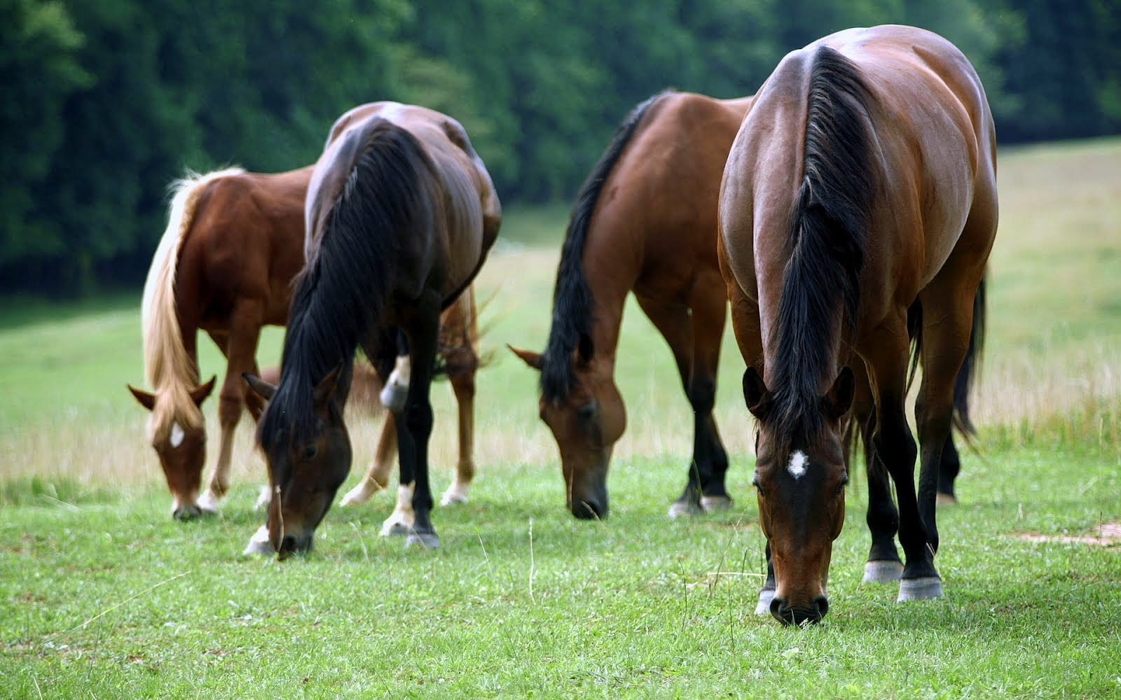 Deane's Farm Equestrian Centre